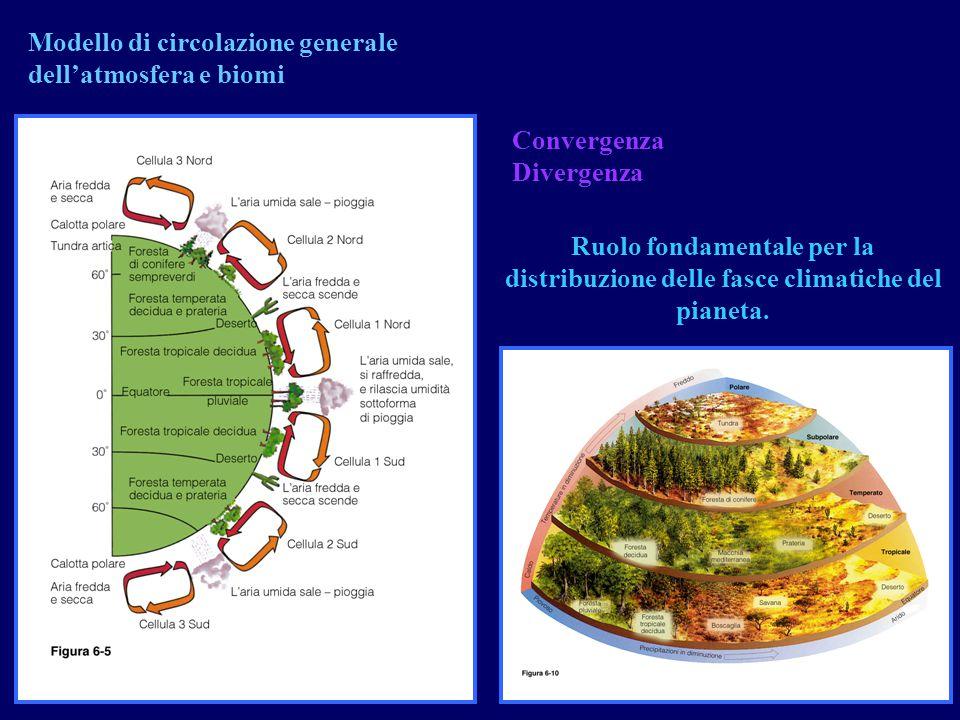 Convergenza Divergenza Modello di circolazione generale dell'atmosfera e biomi Ruolo fondamentale per la distribuzione delle fasce climatiche del pian