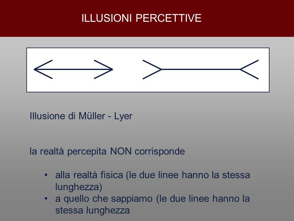 ILLUSIONI PERCETTIVE Illusione di Müller - Lyer la realtà percepita NON corrisponde alla realtà fisica (le due linee hanno la stessa lunghezza) a quel