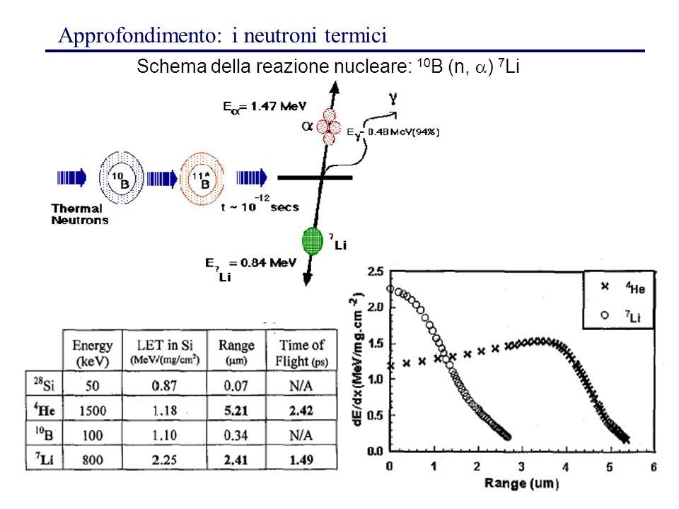 192 Schema della reazione nucleare: 10 B (n,  ) 7 Li Approfondimento: i neutroni termici