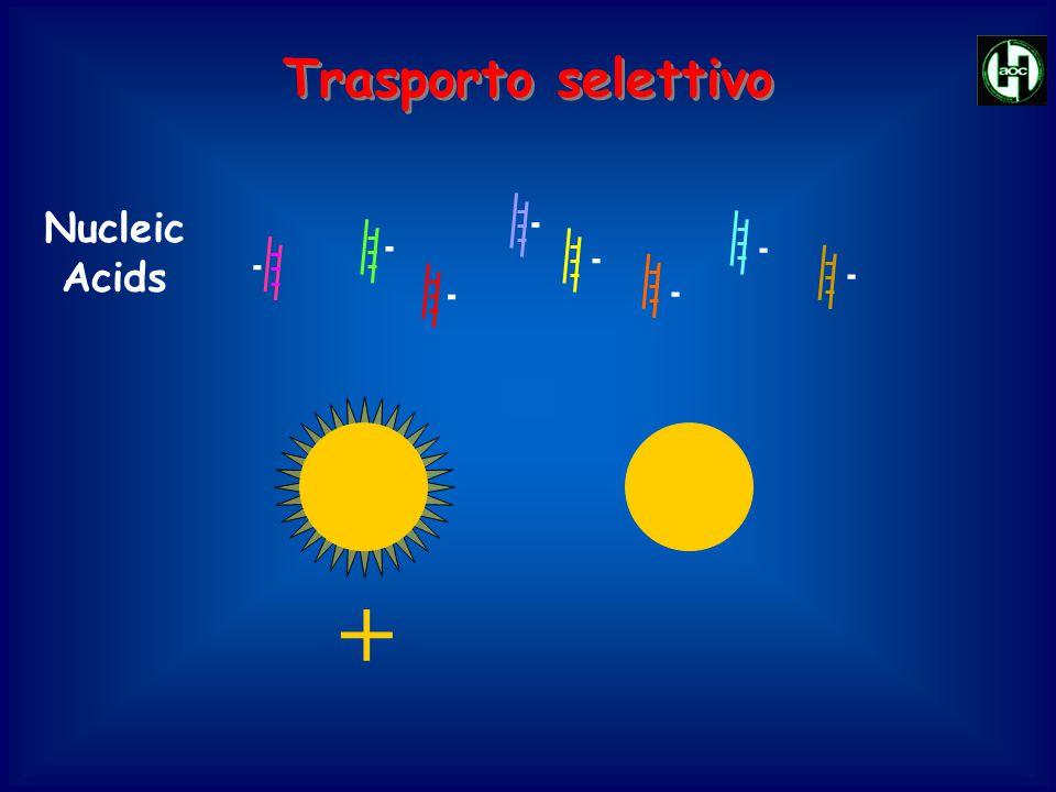Nucleic Acids - - - - - - - - + Trasporto selettivo