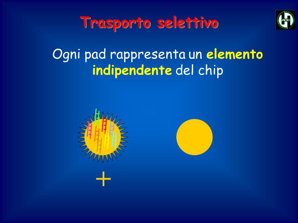 + Ogni pad rappresenta un elemento indipendente del chip Trasporto selettivo