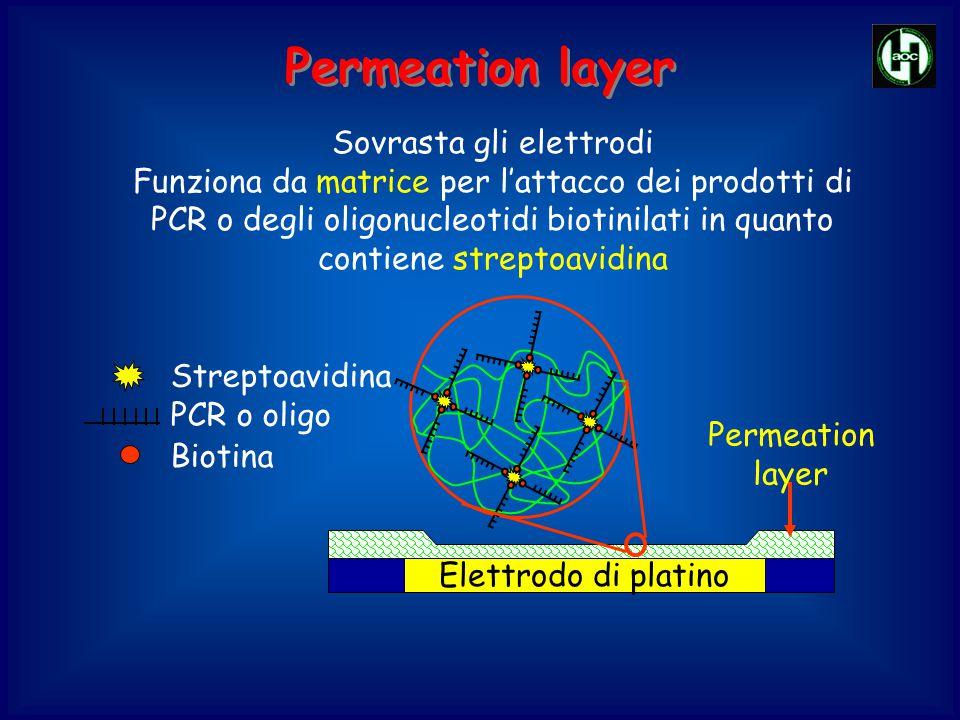 Sovrasta gli elettrodi Funziona da matrice per l'attacco dei prodotti di PCR o degli oligonucleotidi biotinilati in quanto contiene streptoavidina Per