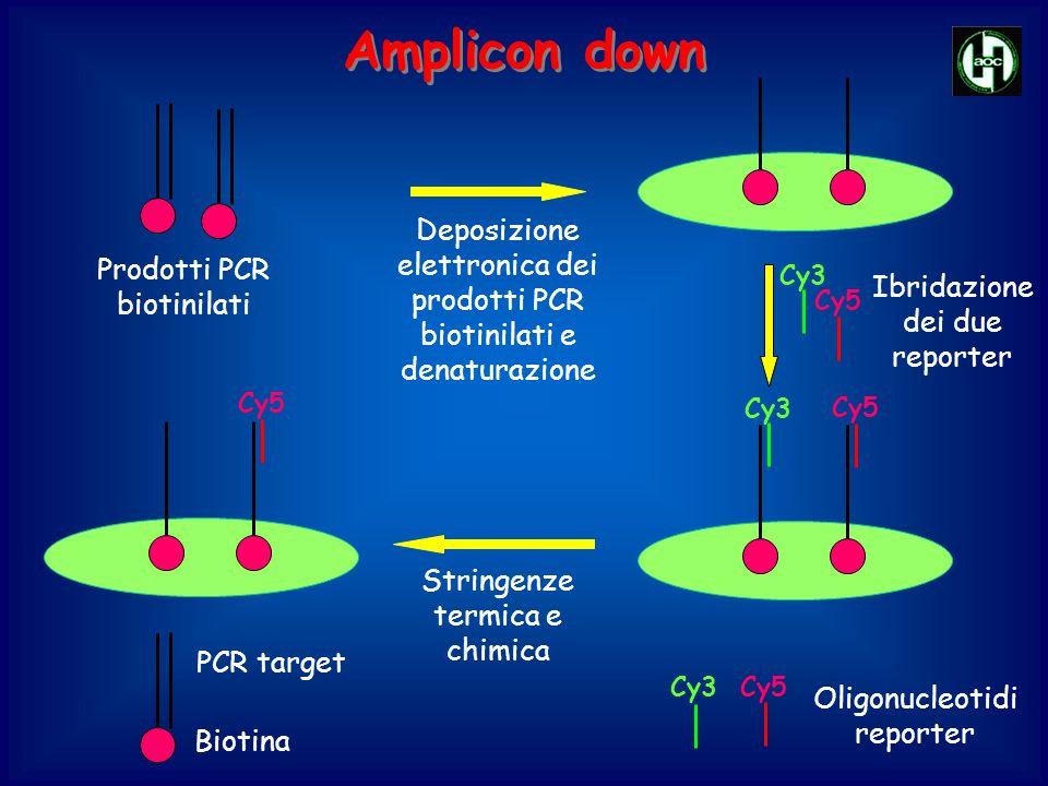 Cy3Cy5 Oligonucleotidi reporter Cy3 Ibridazione dei due reporter Cy5 Cy3 Stringenze termica e chimica Cy5 Deposizione elettronica dei prodotti PCR bio