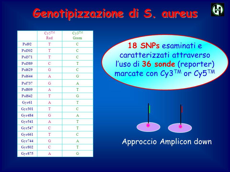 Genotipizzazione di S. aureus 18 SNPs esaminati e caratterizzati attraverso l'uso di 36 sonde (reporter) marcate con Cy3 TM or Cy5 TM TCPol389 GAGyr87