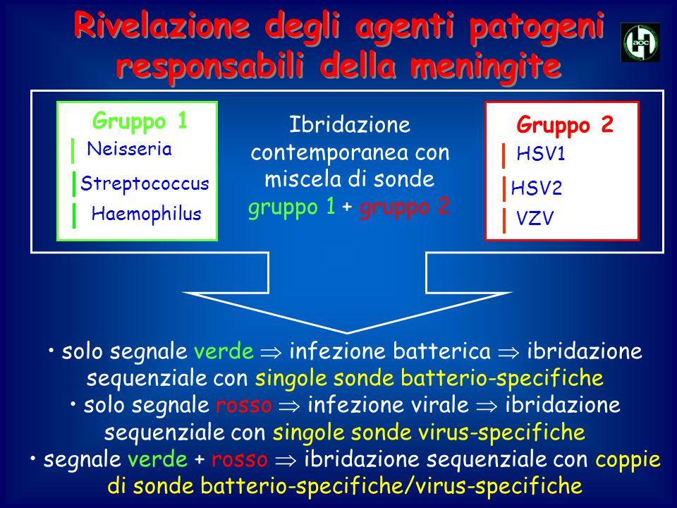 Rivelazione degli agenti patogeni responsabili della meningite Neisseria Streptococcus Haemophilus Gruppo 1 HSV1 HSV2 VZV Gruppo 2 Ibridazione contemp