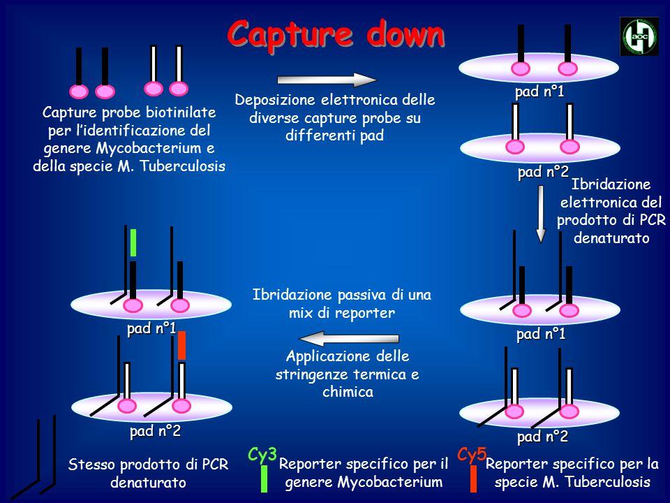 Deposizione elettronica delle diverse capture probe su differenti pad Capture probe biotinilate per l'identificazione del genere Mycobacterium e della