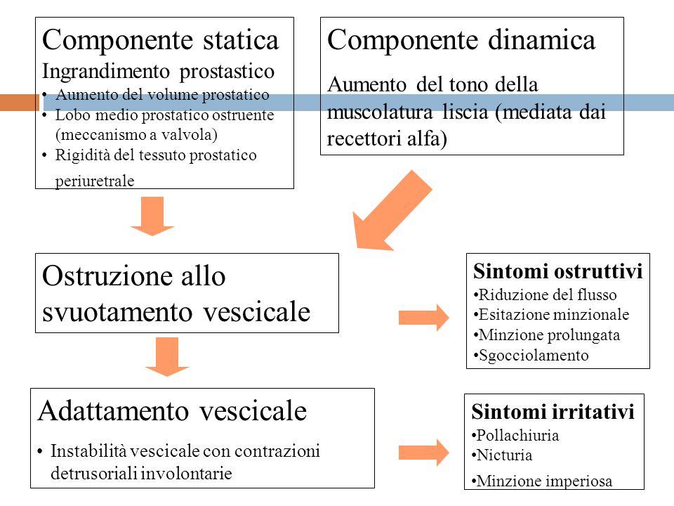 Componente statica Ingrandimento prostastico Aumento del volume prostatico Lobo medio prostatico ostruente (meccanismo a valvola) Rigidità del tessuto prostatico periuretrale Componente dinamica Aumento del tono della muscolatura liscia (mediata dai recettori alfa) Ostruzione allo svuotamento vescicale Adattamento vescicale Instabilità vescicale con contrazioni detrusoriali involontarie Sintomi ostruttivi Riduzione del flusso Esitazione minzionale Minzione prolungata Sgocciolamento Sintomi irritativi Pollachiuria Nicturia Minzione imperiosa