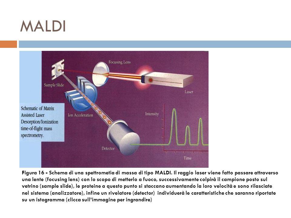 MALDI Figura 16 - Schema di una spettrometia di massa di tipo MALDI.