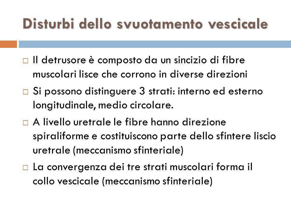  Il detrusore è composto da un sincizio di fibre muscolari lisce che corrono in diverse direzioni  Si possono distinguere 3 strati: interno ed esterno longitudinale, medio circolare.