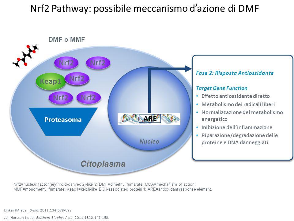 Potenziale meccanismo d'azione di DMF Regolazione dell'omeostasi autoimmune Riduzione della produzione di citochine proinfiammatorie Riduzione dell'attivazione di macrofagi, microglia e astrociti.