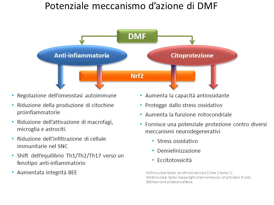 Potenziale meccanismo d'azione di DMF Regolazione dell'omeostasi autoimmune Riduzione della produzione di citochine proinfiammatorie Riduzione dell'at