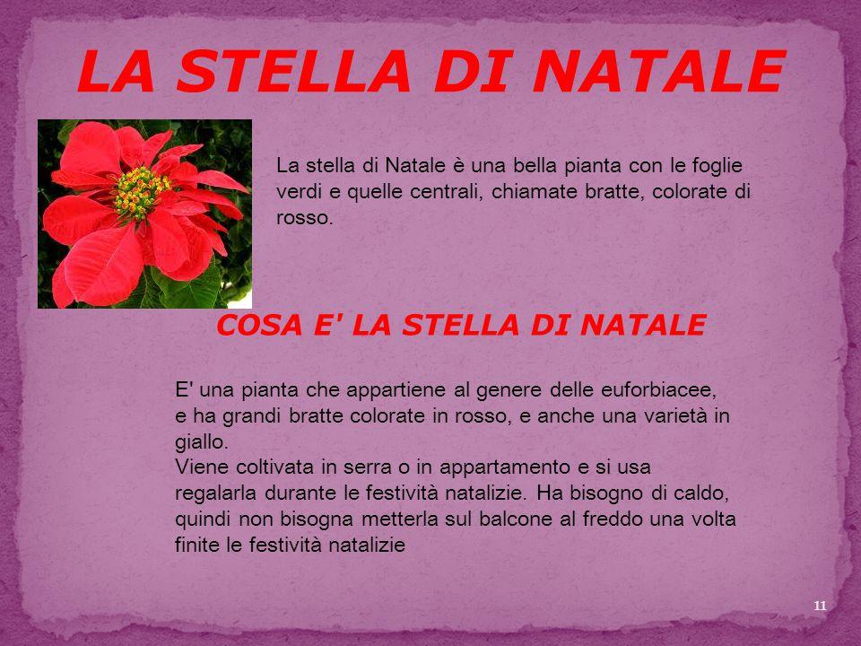 COSA E LA STELLA DI NATALE LA STELLA DI NATALE La stella di Natale è una bella pianta con le foglie verdi e quelle centrali, chiamate bratte, colorate di rosso.