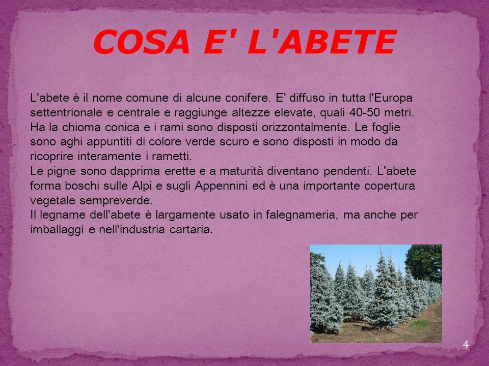 COSA E L ABETE L abete è il nome comune di alcune conifere.