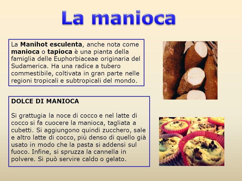 DOLCE DI MANIOCA Si grattugia la noce di cocco e nel latte di cocco si fa cuocere la manioca, tagliata a cubetti. Si aggiungono quindi zucchero, sale