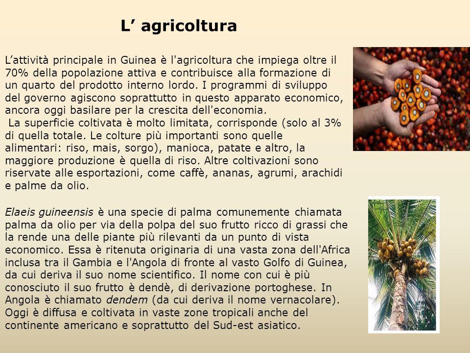 L' agricoltura L'attività principale in Guinea è l'agricoltura che impiega oltre il 70% della popolazione attiva e contribuisce alla formazione di un
