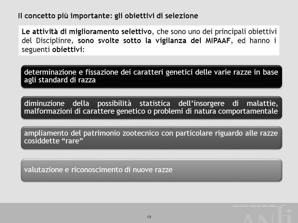 19 Il concetto più importante: gli obiettivi di selezione determinazione e fissazione dei caratteri genetici delle varie razze in base agli standard d