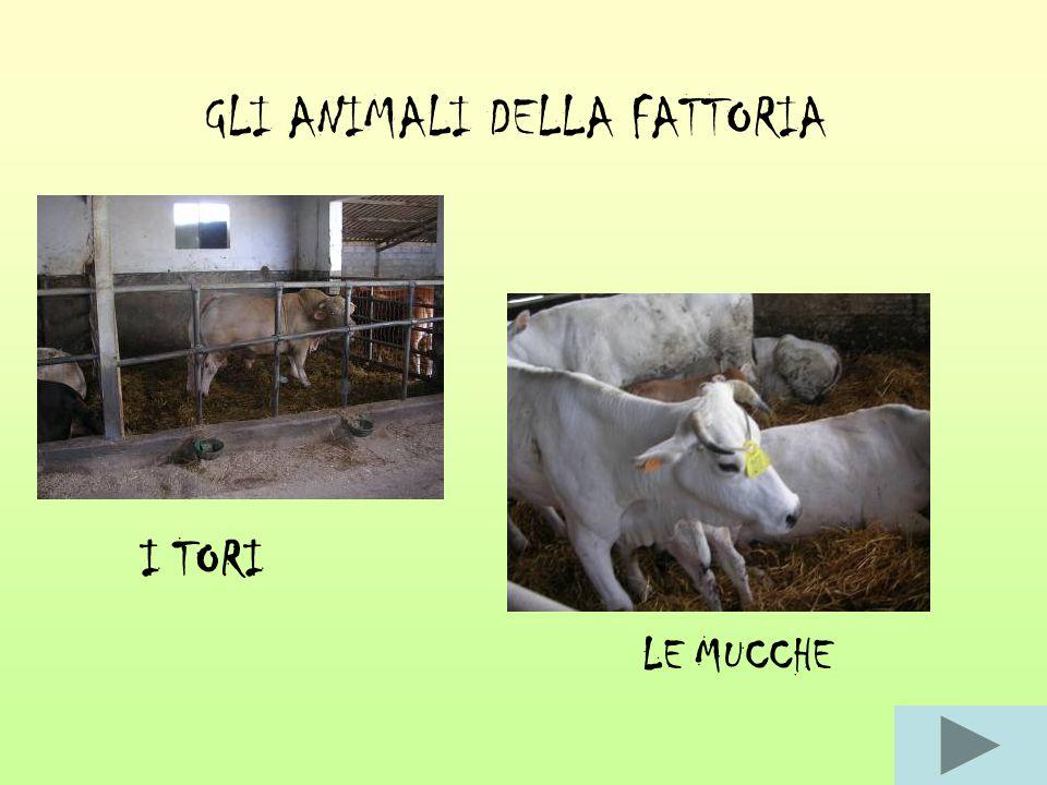 GLI ANIMALI DELLA FATTORIA I TORI LE MUCCHE