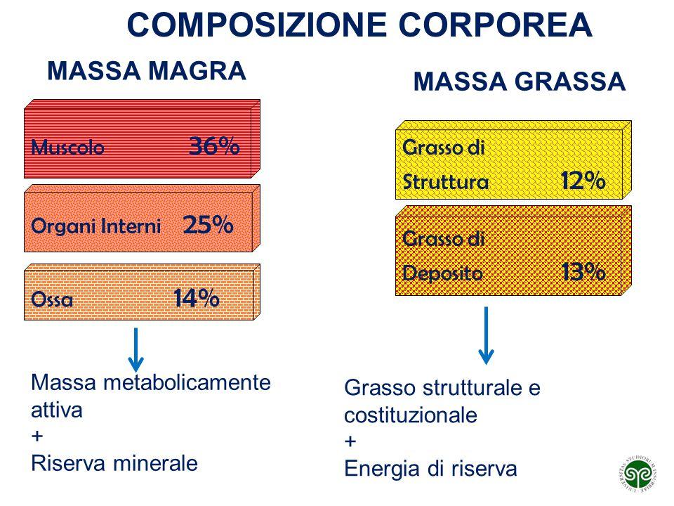Muscolo 36% Organi Interni 25% Ossa 14% Grasso di Struttura 12% Grasso di Deposito 13% Massa metabolicamente attiva + Riserva minerale Grasso struttur