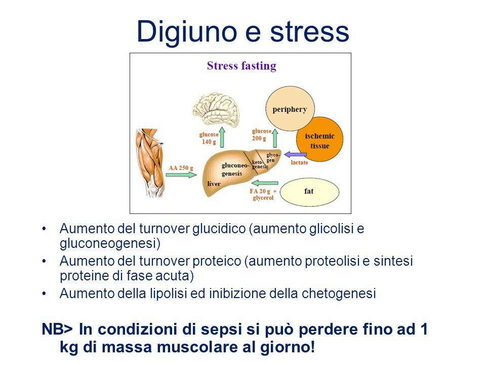 Digiuno e stress Aumento del turnover glucidico (aumento glicolisi e gluconeogenesi) Aumento del turnover proteico (aumento proteolisi e sintesi prote