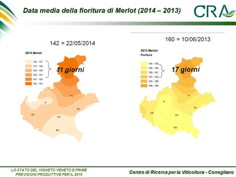 Centro di Ricerca per la Viticoltura - Conegliano LO STATO DEL VIGNETO VENETO E PRIME PREVISIONI PRODUTTIVE PER IL 2015 Data media della fioritura di Merlot (2014 – 2013) 160 = 10/06/2013 17 giorni 11 giorni 142 = 22/05/2014