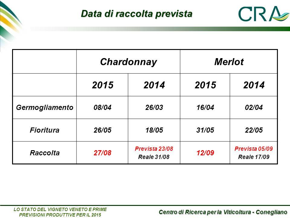 Centro di Ricerca per la Viticoltura - Conegliano LO STATO DEL VIGNETO VENETO E PRIME PREVISIONI PRODUTTIVE PER IL 2015 ChardonnayMerlot 2015201420152014 Germogliamento08/0426/0316/0402/04 Fioritura26/0518/0531/0522/05 Raccolta27/08 Prevista 23/08 Reale 31/08 12/09 Prevista 05/09 Reale 17/09 Data di raccolta prevista