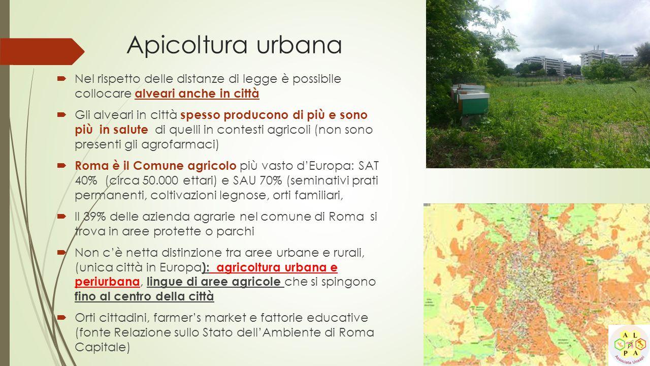 Apicoltura urbana  Nel rispetto delle distanze di legge è possibile collocare alveari anche in città  Gli alveari in città spesso producono di più e
