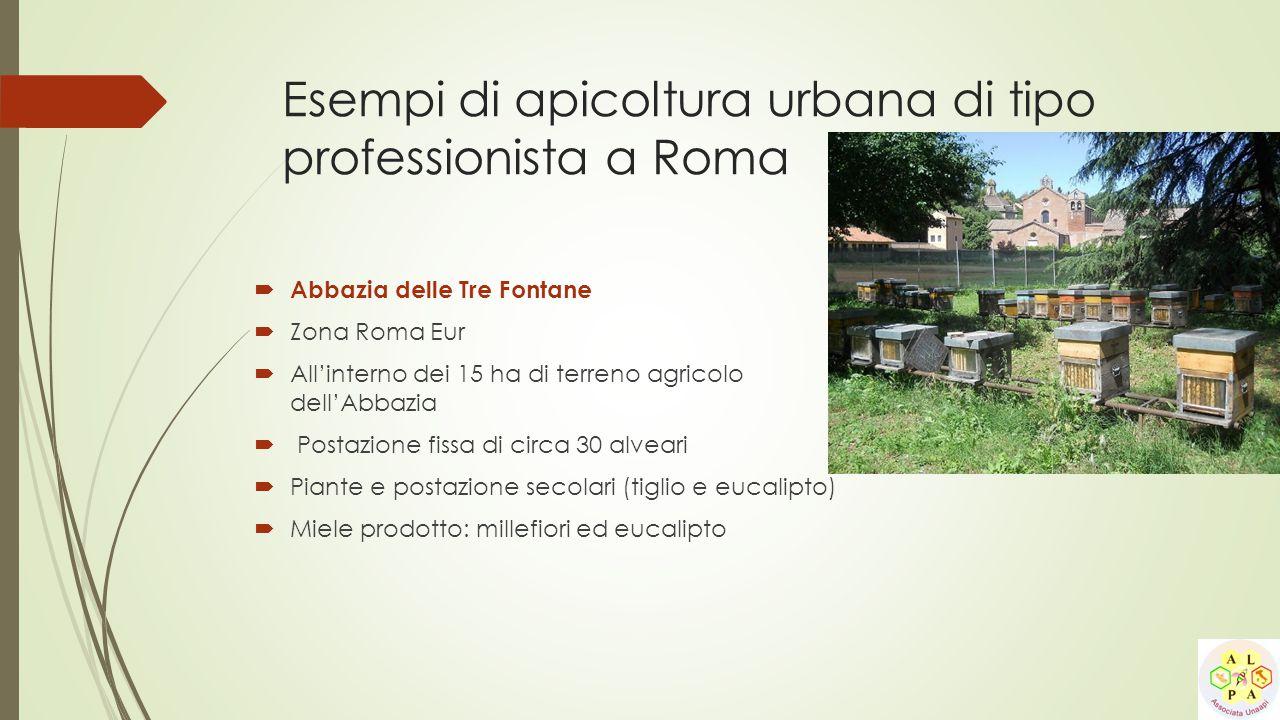 Esempi di apicoltura urbana di tipo professionista a Roma  Abbazia delle Tre Fontane  Zona Roma Eur  All'interno dei 15 ha di terreno agricolo dell