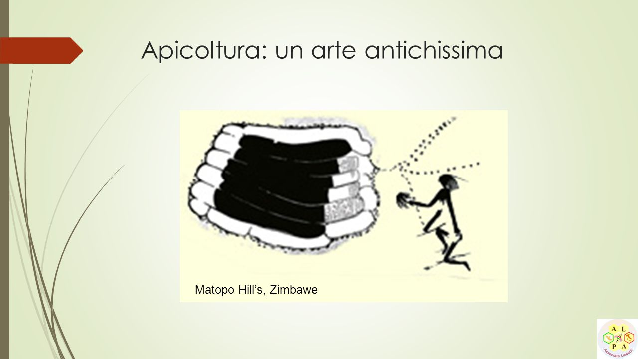 Apicoltura: un arte antichissima Matopo Hill's, Zimbawe