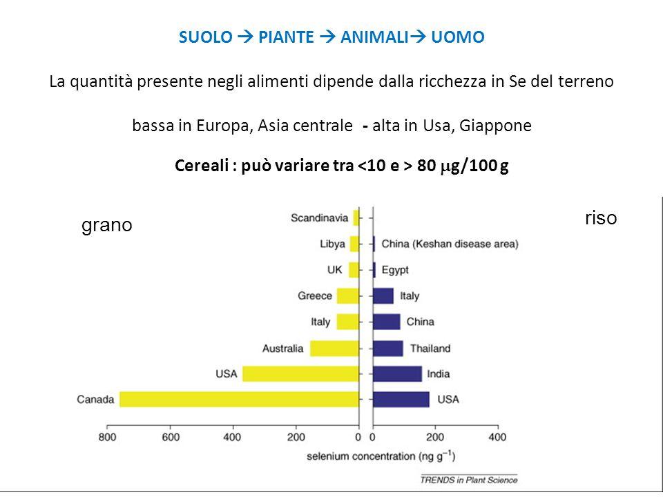 grano riso SUOLO  PIANTE  ANIMALI  UOMO La quantità presente negli alimenti dipende dalla ricchezza in Se del terreno bassa in Europa, Asia central