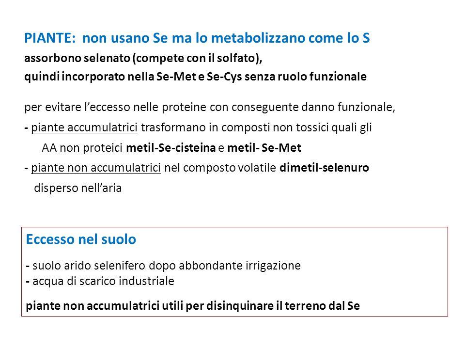 PIANTE: non usano Se ma lo metabolizzano come lo S assorbono selenato (compete con il solfato), quindi incorporato nella Se-Met e Se-Cys senza ruolo f