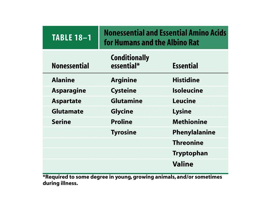 CLASSIFICAZIONE NUTRIZIONALE AMMINOACIDI ESSENZIALI : devono necessariamente essere introdotti preformati con la dieta valina* leucina* isoleucina* * possono essere ottenuti per transaminazione metionina*dai rispettivi  -chetoacidi fenilalanina* triptofano* istidina lisina gli altri tre vanno introdotti come tali treonina AMMINOACIDI NON ESSENZIALI semi-indispensabili risparmiano i precursori essenziali tirosina (sintetizzata da fenilalanina) cisteina (sintetizzata da metionina)