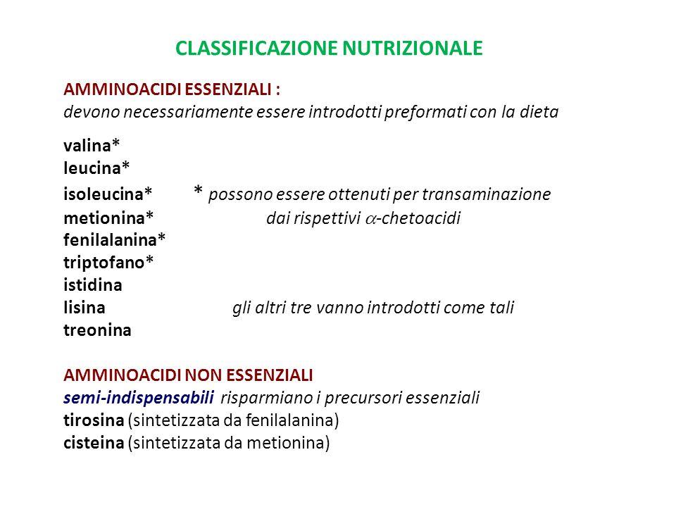 CLASSIFICAZIONE NUTRIZIONALE AMMINOACIDI ESSENZIALI : devono necessariamente essere introdotti preformati con la dieta valina* leucina* isoleucina* *