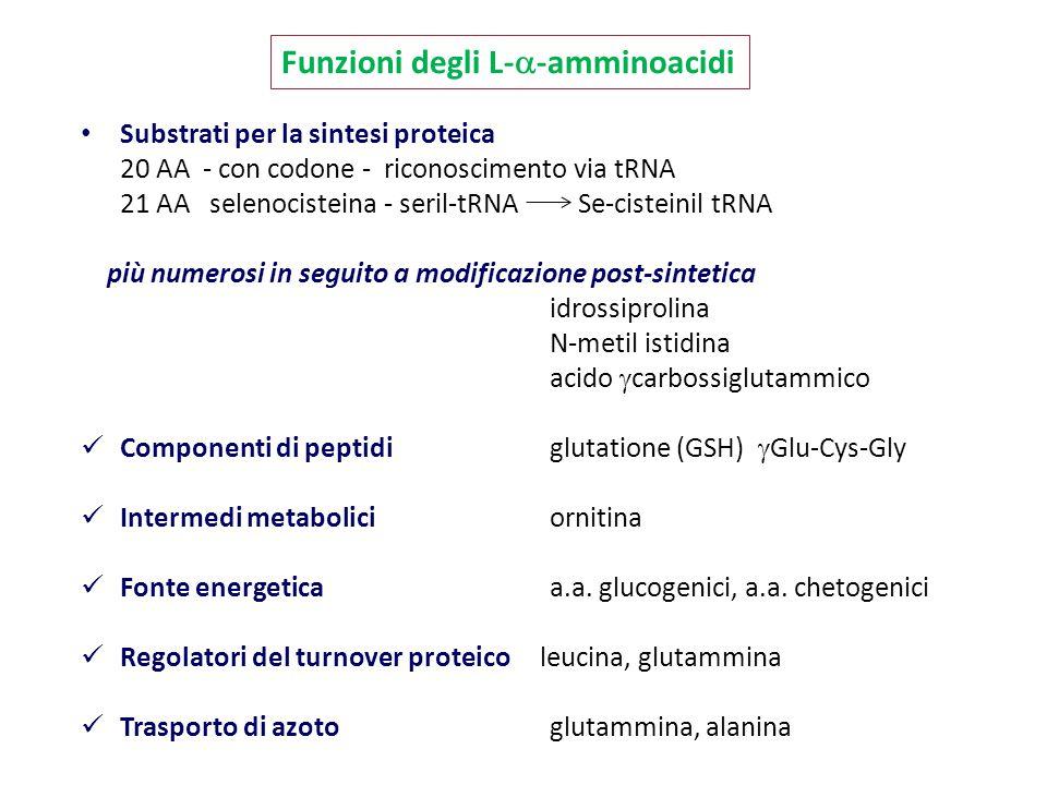 Substrati per la sintesi proteica 20 AA - con codone - riconoscimento via tRNA 21 AA selenocisteina - seril-tRNA Se-cisteinil tRNA più numerosi in seg