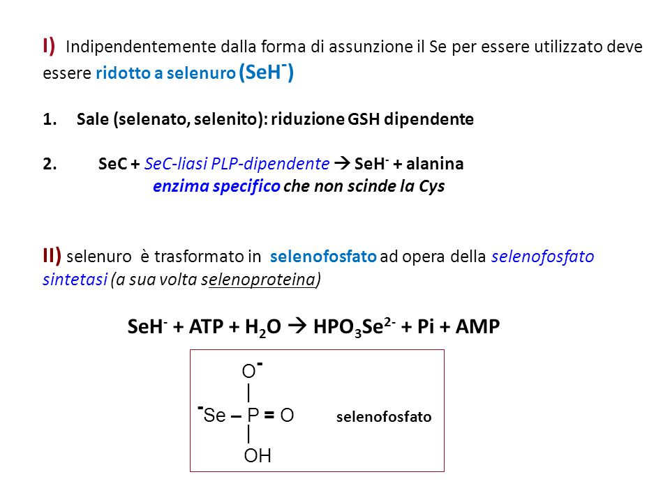 I) Indipendentemente dalla forma di assunzione il Se per essere utilizzato deve essere ridotto a selenuro (SeH - ) 1. Sale (selenato, selenito): riduz