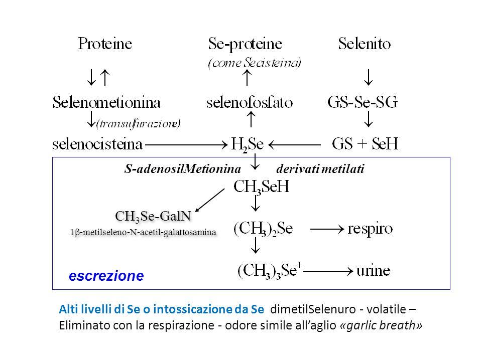 Alti livelli di Se o intossicazione da Se dimetilSelenuro - volatile – Eliminato con la respirazione - odore simile all'aglio «garlic breath» S-adenos