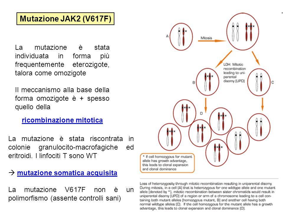 La mutazione è stata individuata in forma più frequentemente eterozigote, talora come omozigote Il meccanismo alla base della forma omozigote è + spes