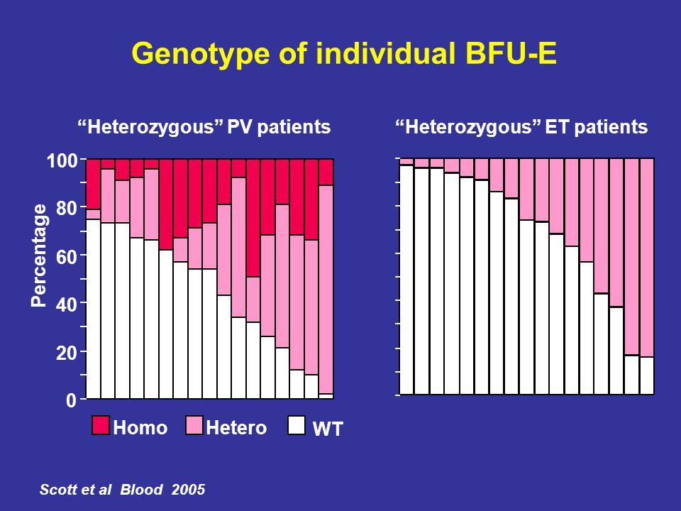 "Genotype of individual BFU-E 0 20 40 60 80 100 ""Heterozygous"" PV patients Percentage HomoHetero WT ""Heterozygous"" ET patients Scott et al Blood 2005"