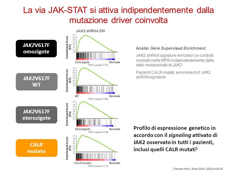 1.Rampal R et al, Blood 2014; 123(22):e123-33 JAK2V617F WT JAK2V617F omozigote JAK2V617F eterozigote CALR mutato Profilo di espressione genetico in ac