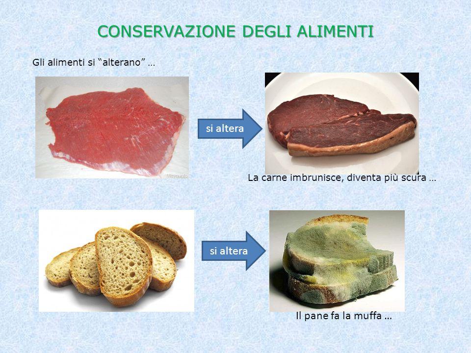 """CONSERVAZIONE DEGLI ALIMENTI Gli alimenti si """"alterano"""" … si altera La carne imbrunisce, diventa più scura … si altera Il pane fa la muffa …"""