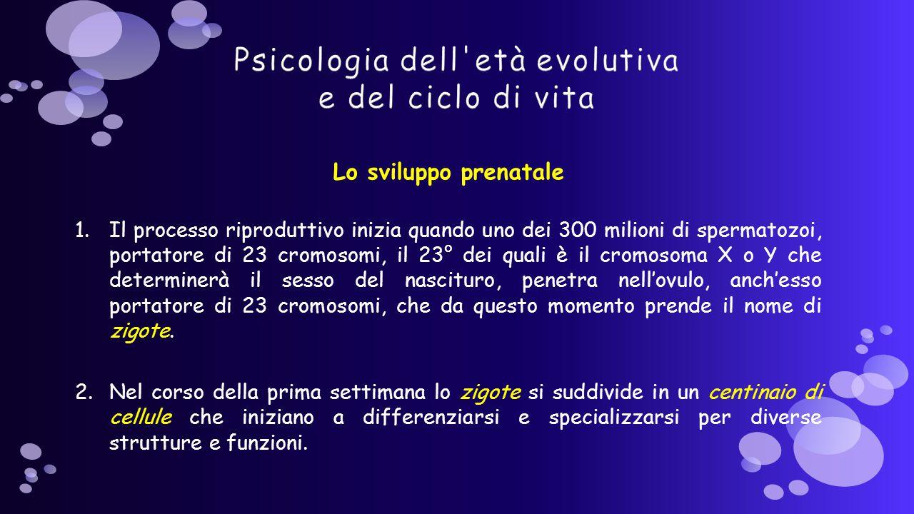 Lo sviluppo prenatale 1.Il processo riproduttivo inizia quando uno dei 300 milioni di spermatozoi, portatore di 23 cromosomi, il 23° dei quali è il cromosoma X o Y che determinerà il sesso del nascituro, penetra nell'ovulo, anch'esso portatore di 23 cromosomi, che da questo momento prende il nome di zigote.