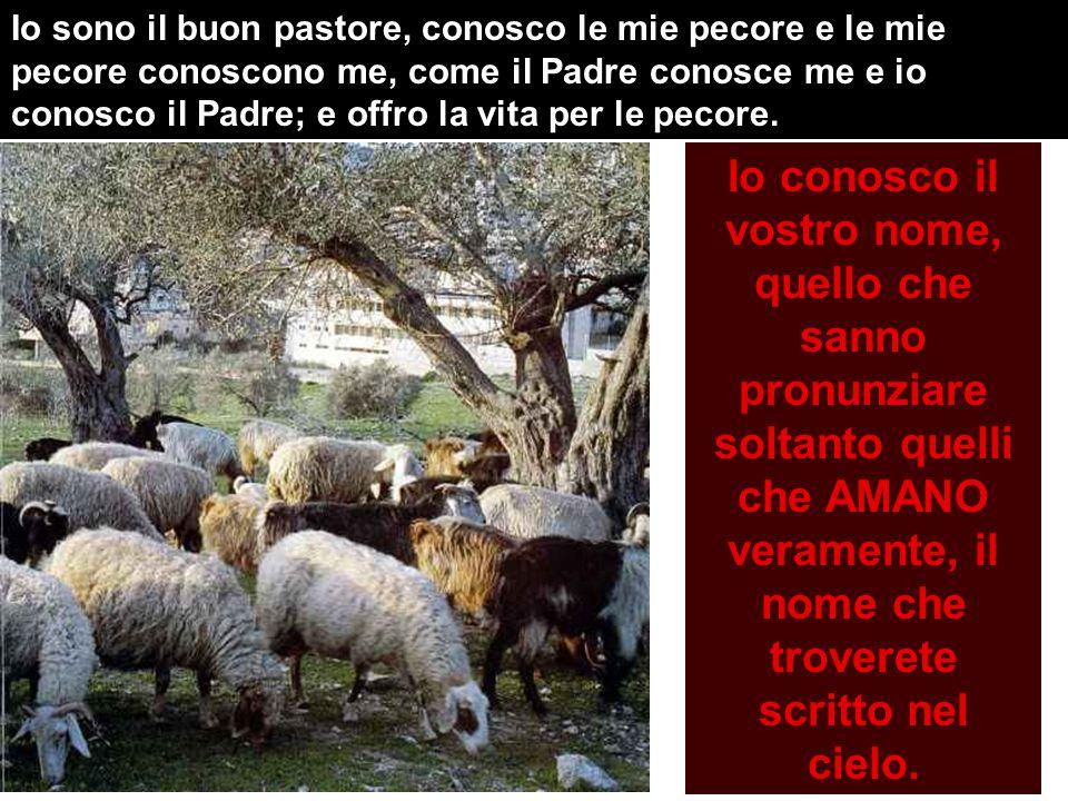 Il buon pastore offre la vita per le pecore.