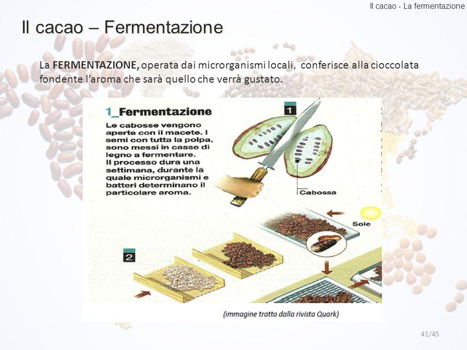 41/45 Il cacao – Fermentazione Il cacao - La fermentazione La FERMENTAZIONE, operata dai microrganismi locali, conferisce alla cioccolata fondente l'a