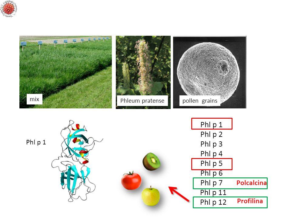 mix Phleum pratensepollen grains Phl p 1 Phl p 2 Phl p 3 Phl p 4 Phl p 5 Phl p 6 Phl p 7 Phl p 11 Phl p 12 Polcalcina Profilinap Phl p 1