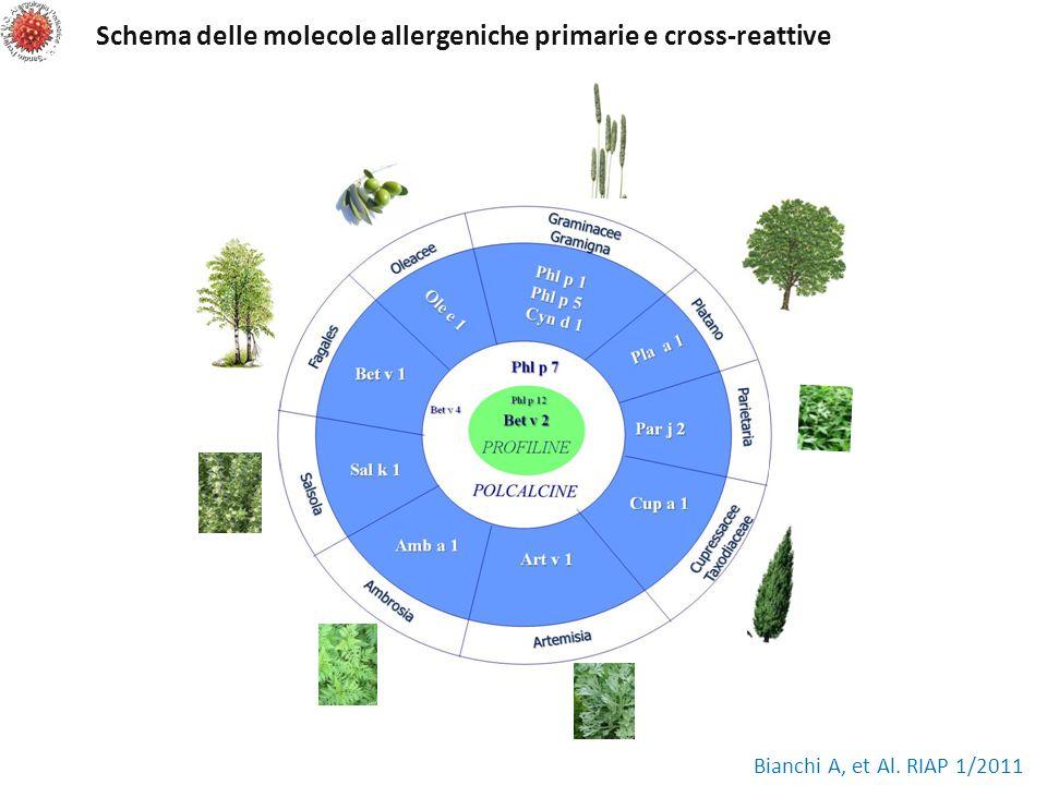 Schema delle molecole allergeniche primarie e cross-reattive Bianchi A, et Al. RIAP 1/2011