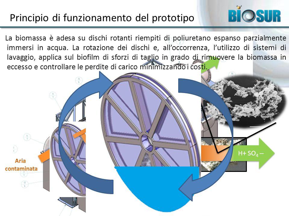 Principio di funzionamento del prototipo H 2 S O 2 H+ SO 4 -- La biomassa è adesa su dischi rotanti riempiti di poliuretano espanso parzialmente immersi in acqua.