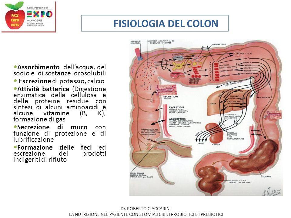 FISIOLOGIA DEL COLON Assorbimento dell'acqua, del sodio e di sostanze idrosolubili Escrezione di potassio, calcio Attività batterica (Digestione enzim