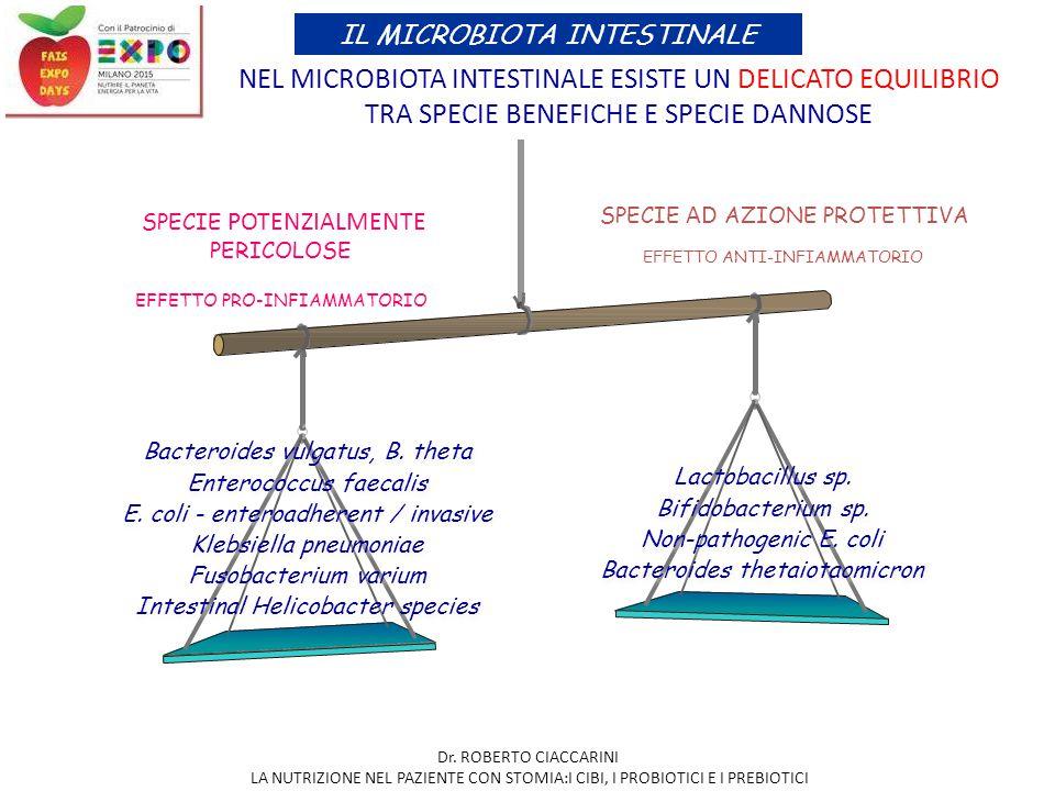NEL MICROBIOTA INTESTINALE ESISTE UN DELICATO EQUILIBRIO TRA SPECIE BENEFICHE E SPECIE DANNOSE Bacteroides vulgatus, B. theta Enterococcus faecalis E.