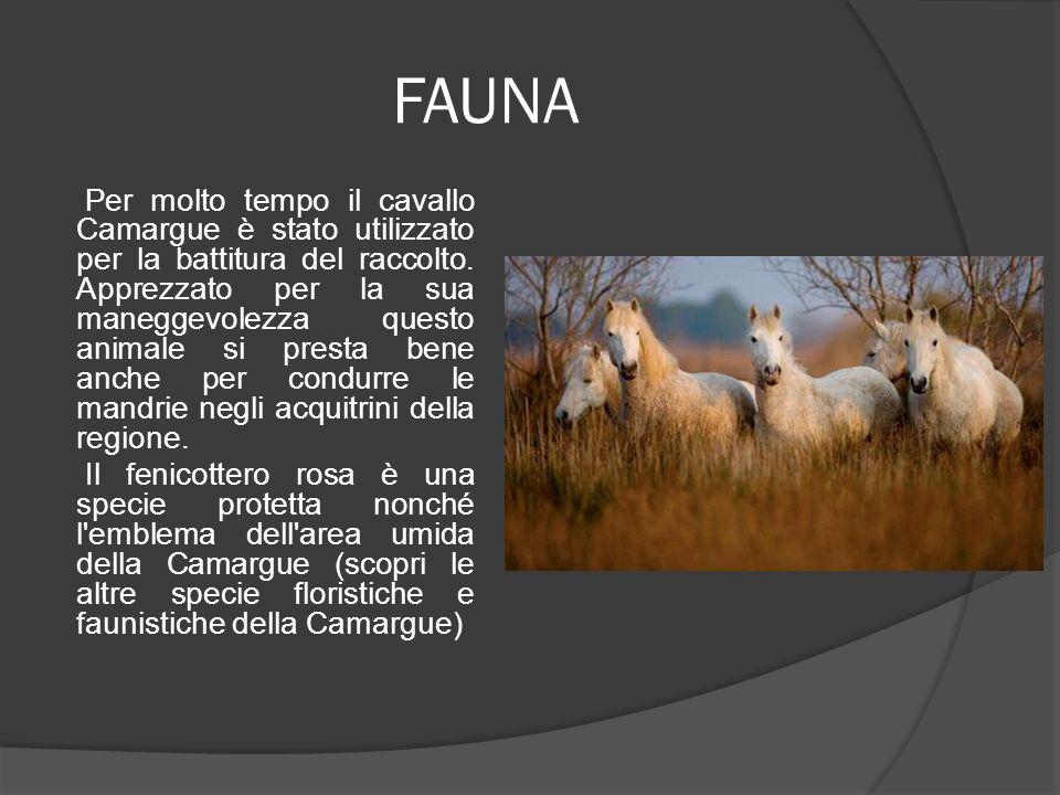 FAUNA Per molto tempo il cavallo Camargue è stato utilizzato per la battitura del raccolto. Apprezzato per la sua maneggevolezza questo animale si pre