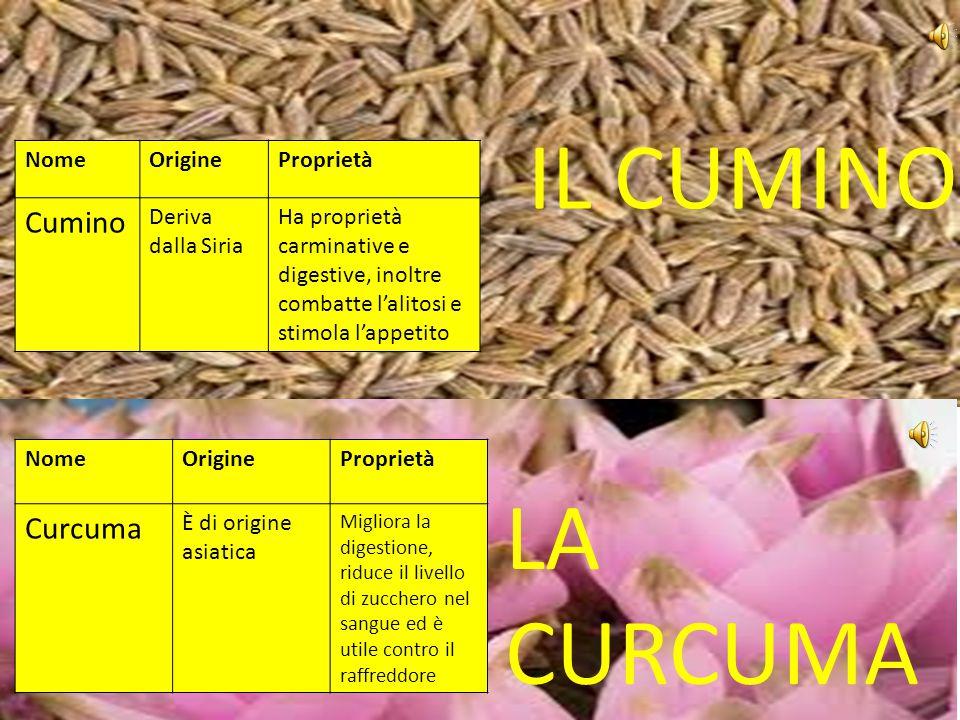 Le erbe curative Realizzato da: Alessandro, Nicolò, Matteo, Lorenzo