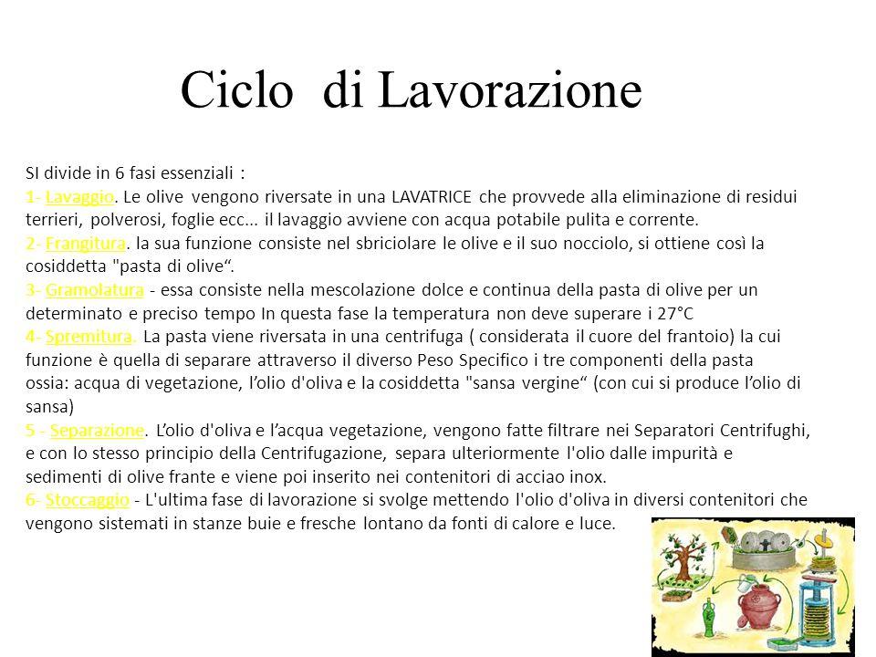 L'olio extra vergine di oliva è prodotto da olive che sono tradizionalmente raccolte : 1.Battendo i rami con bastoni flessibili, in modo da provocare